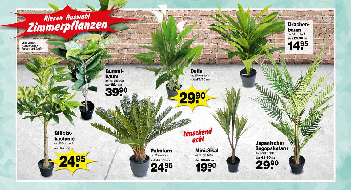Riesen-Auswahl dekorative Zimmerpflanzen in vielen verschiedenen Ausführungen, Farben und Größen